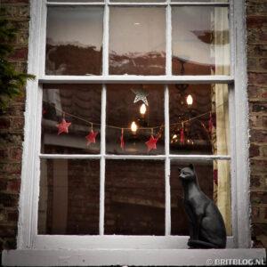 Ga op zoek naar katten in York, Groot-Brittannië.