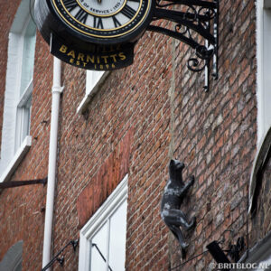The York Cat Trail
