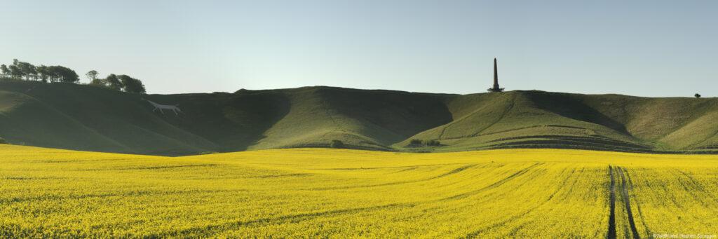 Rape Seed (koolzaad) velden bij een White Horse